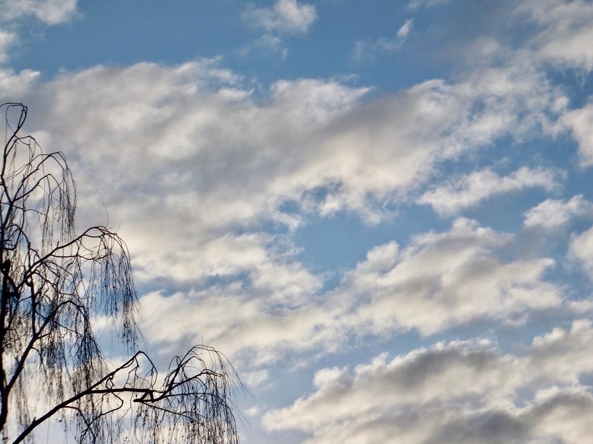 weiß-graue Wolken vor hellblauem Himmel, links im Vordergrund die Äste einer Birke