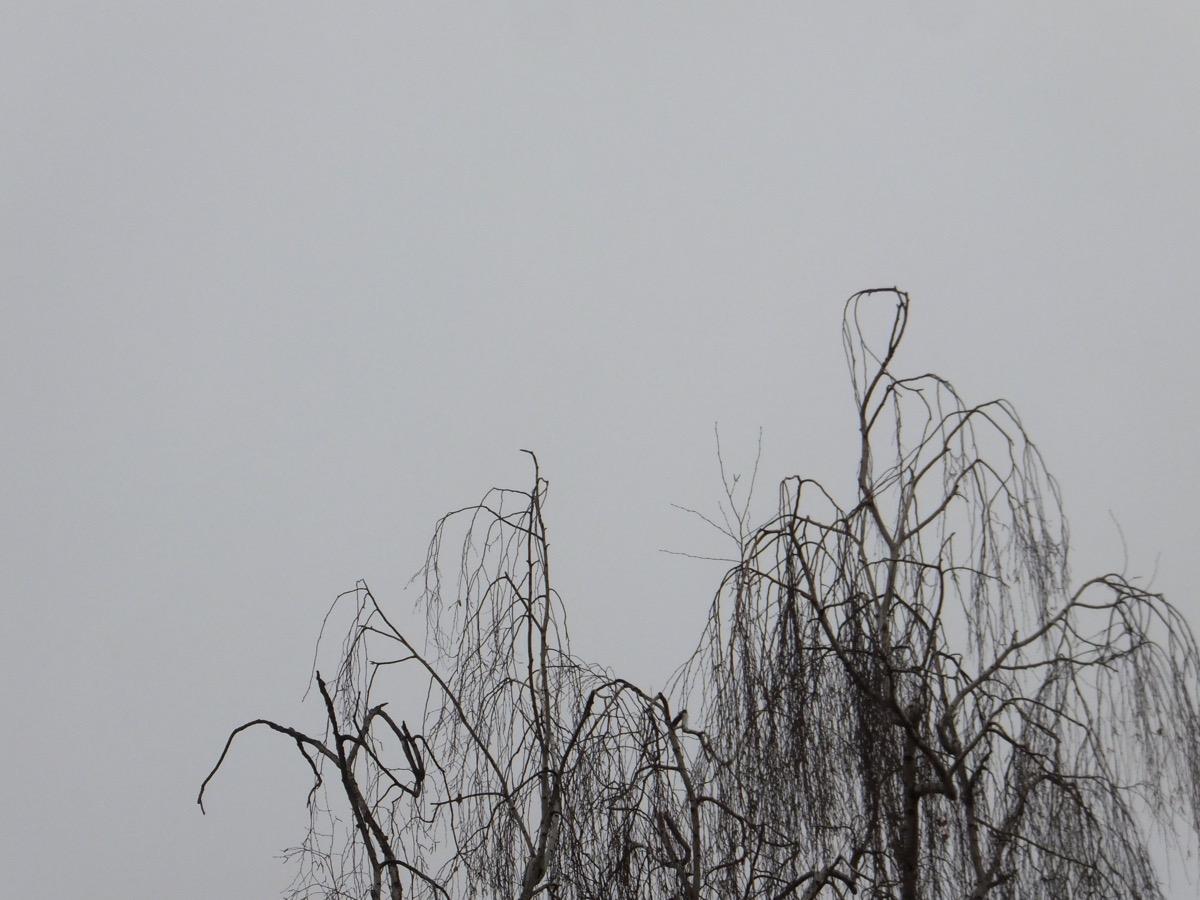 Grauer Himmel, im Vordergrund eine unbelaubte Birken-Krone