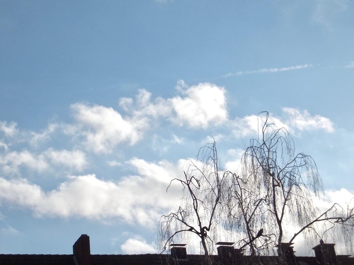 ein paar Cirrus-Wolken am blauen Himmel, unten im Vordergrund ein Hausdach und eine Birke