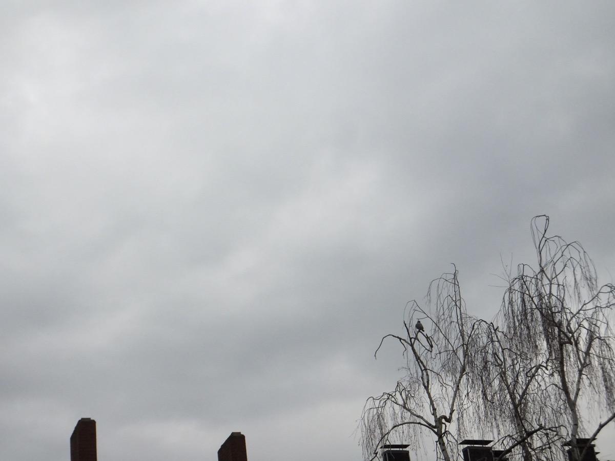 Wolken an grauem Himmel, unten Schornsteine und eine Taube in unbelaubter Birkenkrone