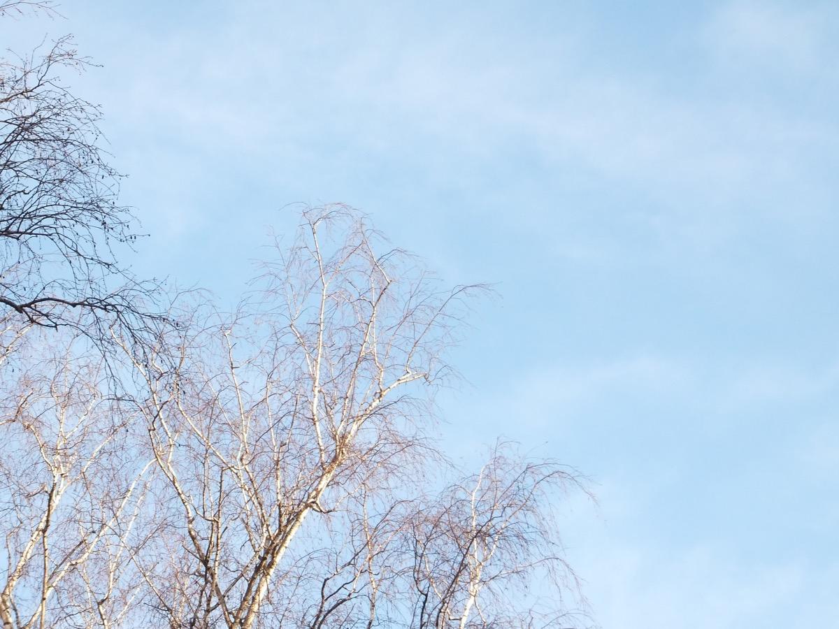 Dünne weiße Wolken vor hellblauem Himmel, im Vordergrund unbelaubte Birkenkronen