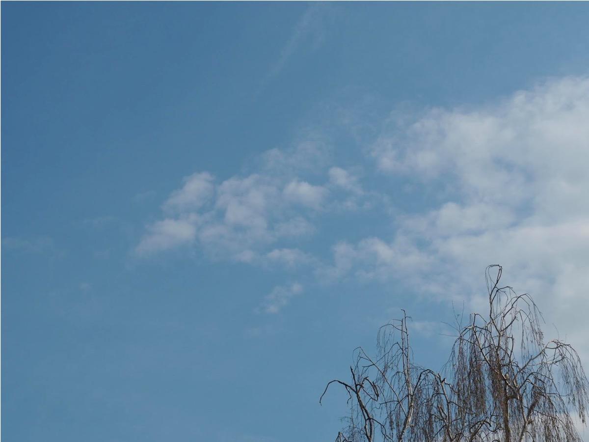 Blasse Federwolken an hellblauem Himmel,unten rechts eine unbelaubte Birkenkrone